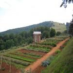 Planning a Vegetable Garden RLP