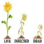 Virus on a Plantation